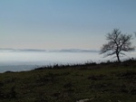 Espinos solitarios cerca de la cumbre del Oketa