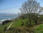 Arboles del monte Serantes de Santurtzi