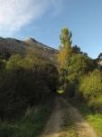 Arboles de Oriñon-Cantabria