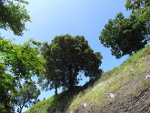 Arboles del bidegorri de la via minera de la Orkonera