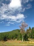 Arboles de las laderas del Ganeran en la Sierra de Triano