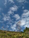 Arboles de la Sierra de Triano
