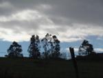 Arbol del paseo de Pobeña al Kobaron