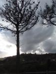Arboles del paseo de Pobeña al Kobaron